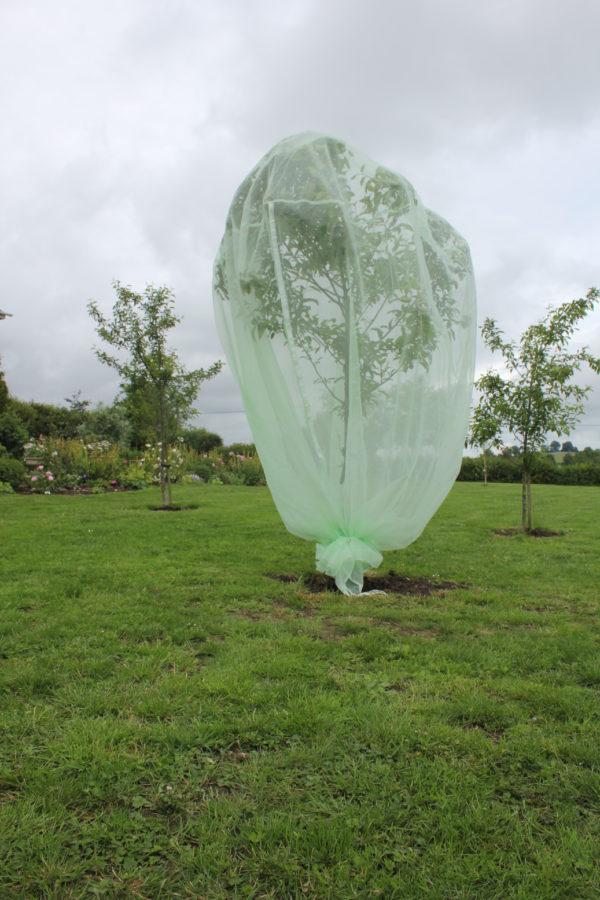 haxnicks tree net