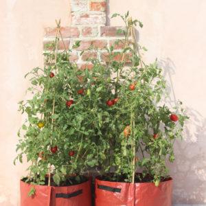 haxnicks tomato patio plant