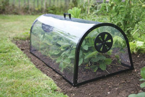 kitchen garden cloche